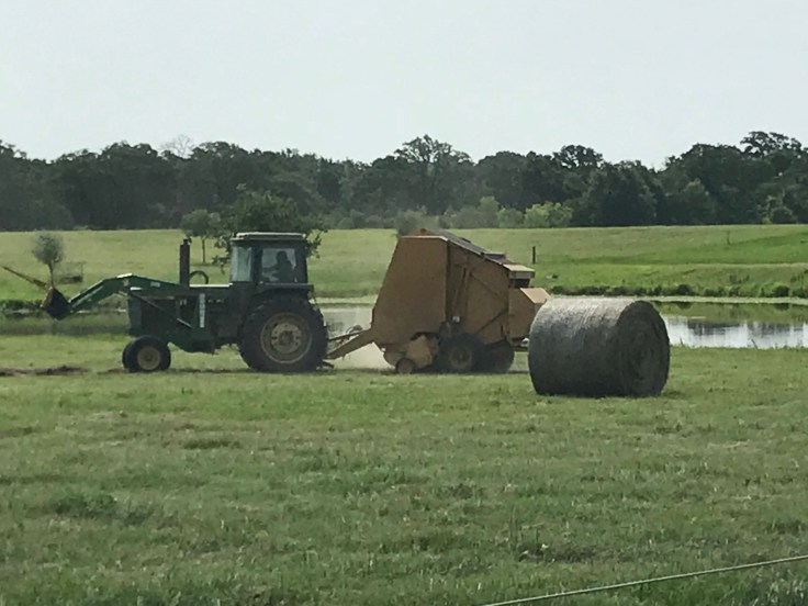 Disappointing-Hay-Harvest-1.jpg