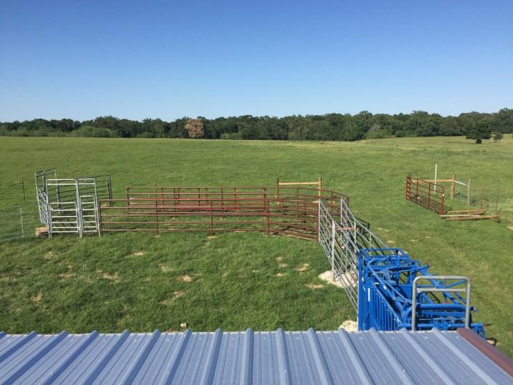 Working-on-Working-Cattle-5.jpg